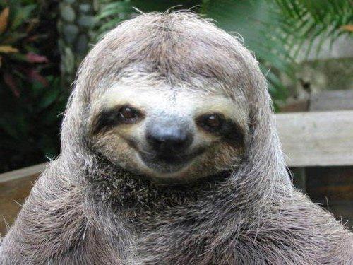 счастливые ленивцы фото